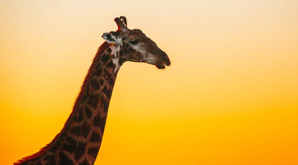 travel_safari_southafrica